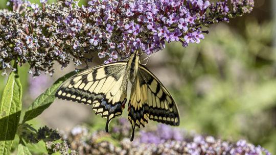 Schmetterlings-Reich Rhein-Nahe